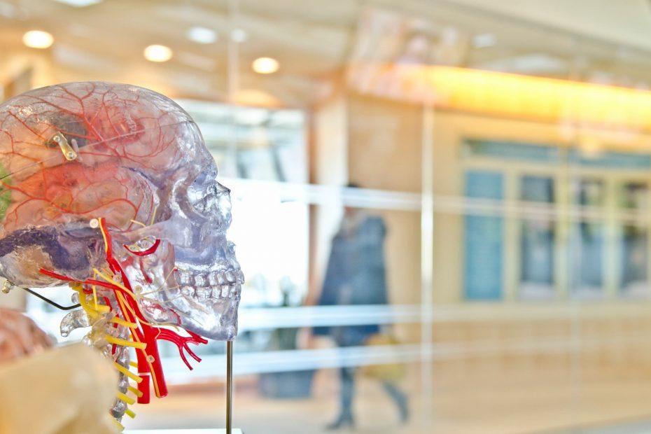 crane transparent en plastique laissant le cerveau visible